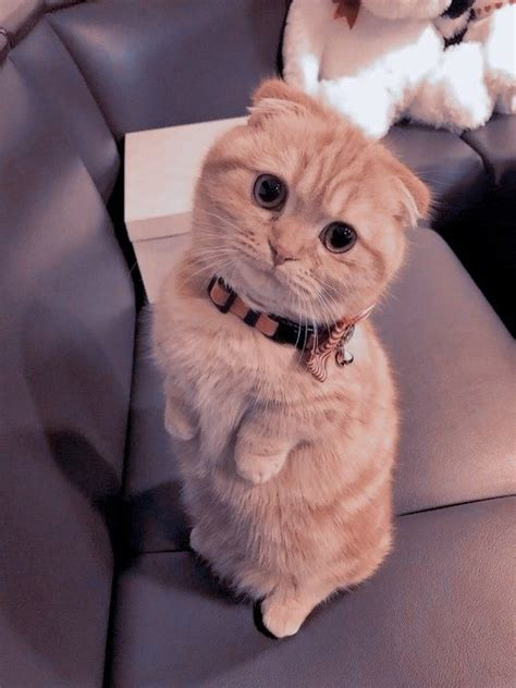 aesthetic cat anak kucing menggemaskan kucing bayi