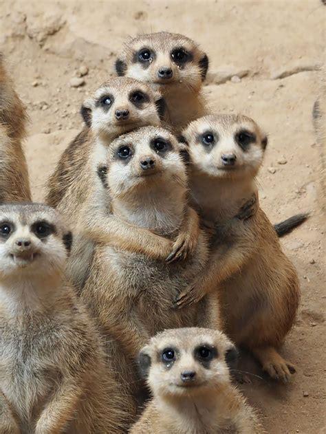 incredibly heartwarming animal family