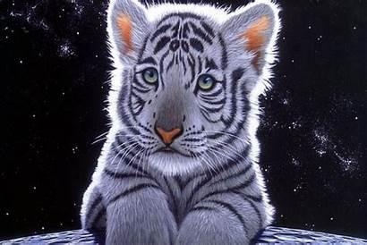Fondos Pantalla Tigre Tigres Windows Tiger Blanco