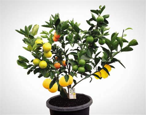 Wtf?! This 1 Tree Grows 7 Different Kinds Of Fruit No