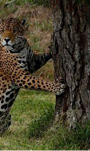 Guest Photos   Jukani Wildlife Sanctuary, Plettenberg Bay ...