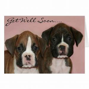 Get well soon Boxer Puppies greeting card | Zazzle