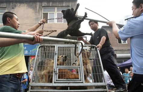 china jails  people  selling poisoned dog meat