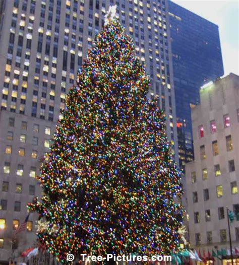 times square christmas tree in times square new york ny picture