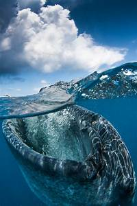 See What Lies Beneath The Water's Surface