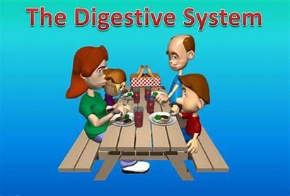 Digestive System Organs Animation Lab Following Bio