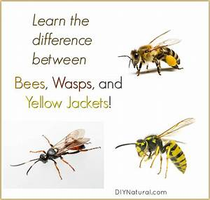 Difference Between Hornet And Yellowjacket