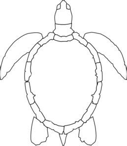 turtle template turtle outline md gourd tools and patterns turtle turtle outline and sea