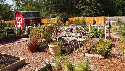 Vegetable Garden Planning For Beginners