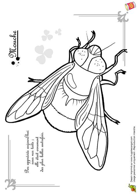 mouche cuisine coloriage découverte petites bêtes mouche