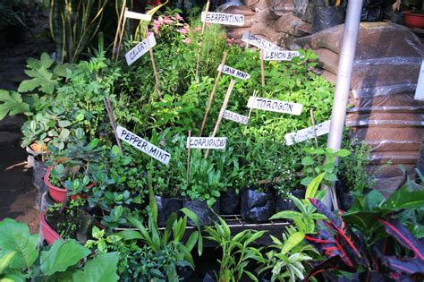 grow vegetables vertically  steps  pictures
