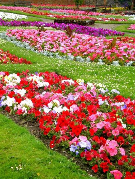 Types Of Garden Flowersjpg (1 Comment) Hires 720p Hd