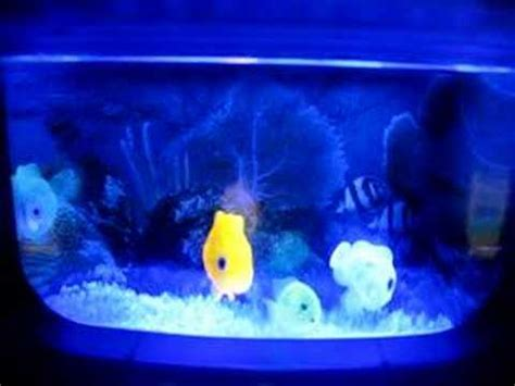 Uv Len Aquarium by Aquarium With Uv Led
