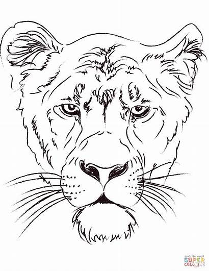 Lioness Coloring Head Lion Pages Lions Drawing