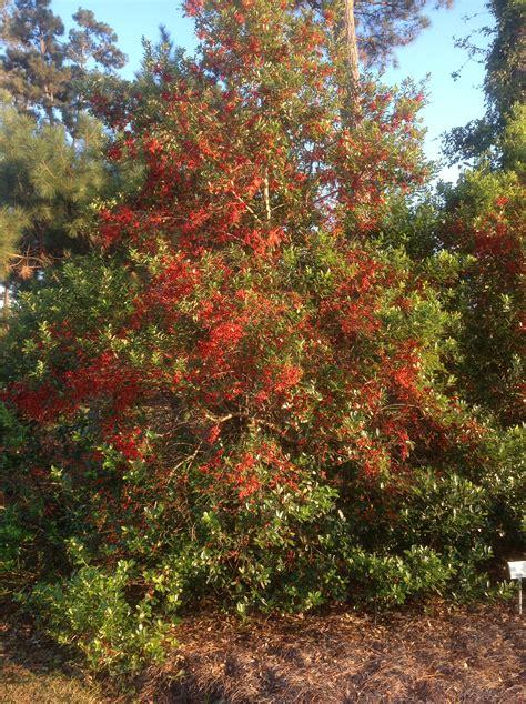 find color  fall louisiana landscapes lsu agcenter