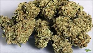 medication marijuana