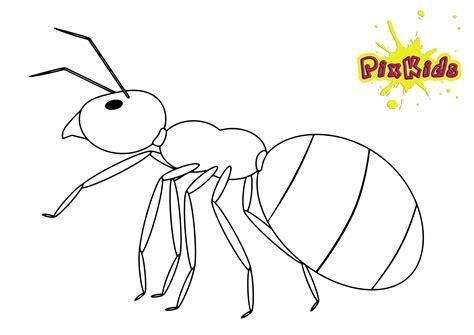 insekten ausmalbilder fruehling kostenlose malvorlagen