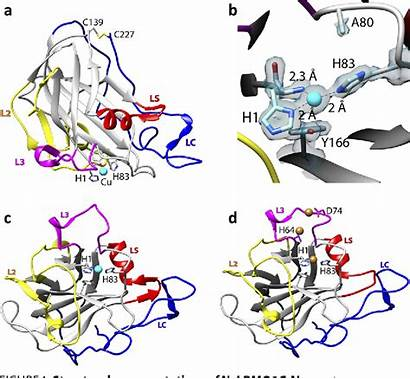 Polysaccharide Figure Substrate Lytic Characterization Structural Functional