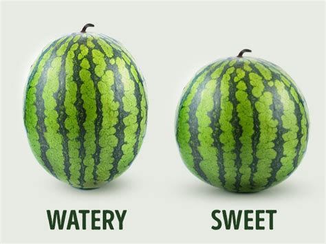 pick  perfect watermelon tips   experienced