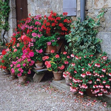planting fuchsias in pots 17 best images about geraniums on window boxes cordoba spain and terracotta pots