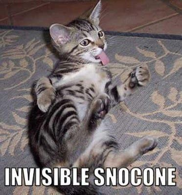 Invisible Cat Memes - invisible cats 1funny com