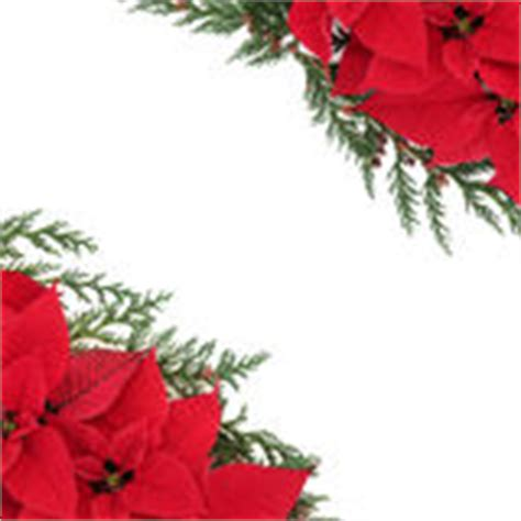 poinsettia floral border stock photo image  design
