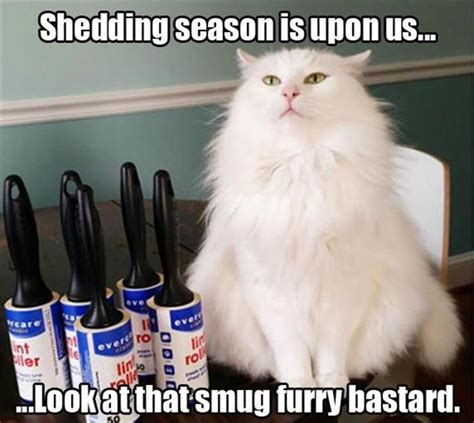 Shedding Season - shedding season is here and cats it realfunny