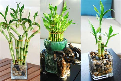 dapatkan inspirasi contoh tanaman hias pot