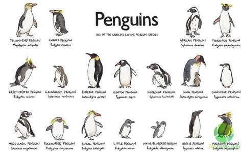 All Types of Penguin Species