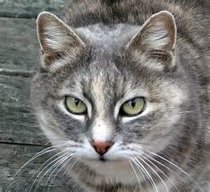 cat faces garden journal 05