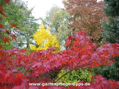 Herbst Gartenarbeit by Gartenkalender Oktober Gartenarbeiten Im Herbst
