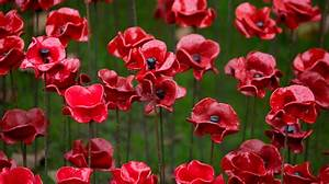 Ceramic Poppies To Be Given To Commonwealth Leaders