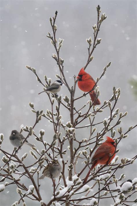 winter birds   yard audubon  york