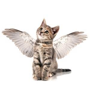cats with wings eli5 if cats are lactose intolerant how did we come to