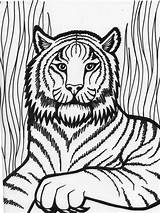 Coloring Tiger Pages Printable sketch template