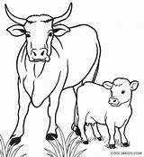 Cow Calf Coloring Cows Pages Drawing Printable Cool2bkids Line Funny Cartoon Simple Colouring Sheets Drawings Easy Farm Animals Animal Books sketch template