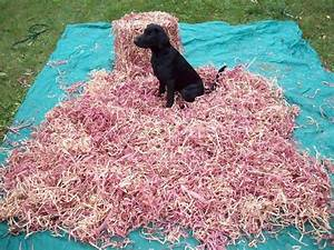 lcs red cedar bedding for dogs lion country supply With cedar shavings for dog kennels