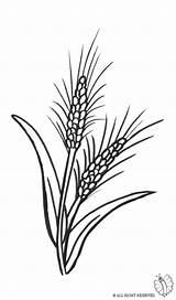 Wheat Coloring Pages Printable sketch template