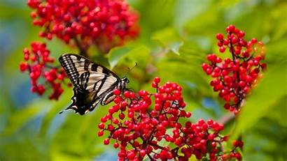 Butterfly Wallpapers Android Background Backgrounds Flowers Beauty