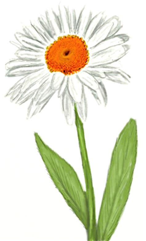 draw  daisy draw step  step