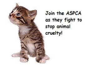 ASPCA Cat Org