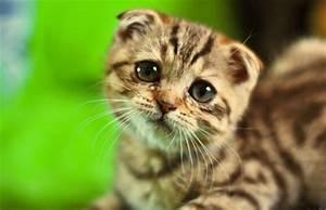 Pics Of Sad Faces - Cliparts.co