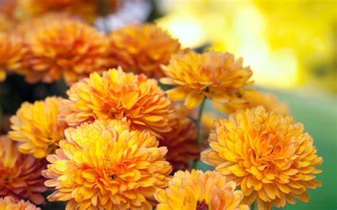 Herbst Blume Im Garten by Herbstblumen Garten Winterhart Herbstblumen Garten
