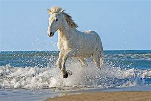 Horses Galloping In Water | www.pixshark.com - Images ...
