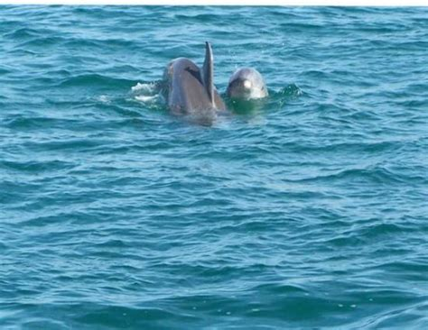 Glass Bottom Boat Tours In Destin Florida by The Southern Star Dolphin And Glass Bottom Boat Picture