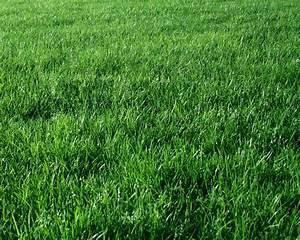 Green Grass Background | Gallery Yopriceville - High ...