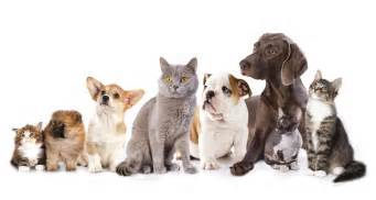 dogs cats and cat populations are approaching human numbers