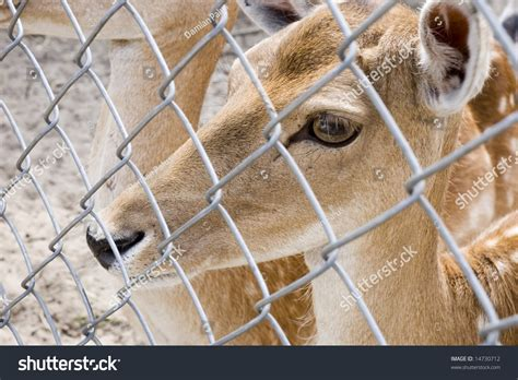 animal world wallpaper wild animals   captivity