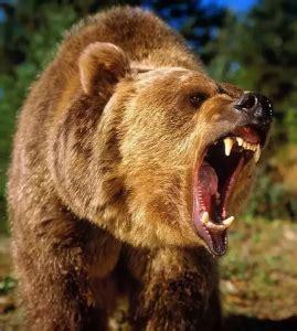 john grizzly adams bear hunter legends  america
