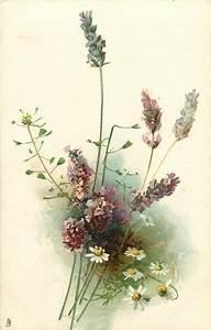 17 Best images about All Lavender vintage cards & labels ...